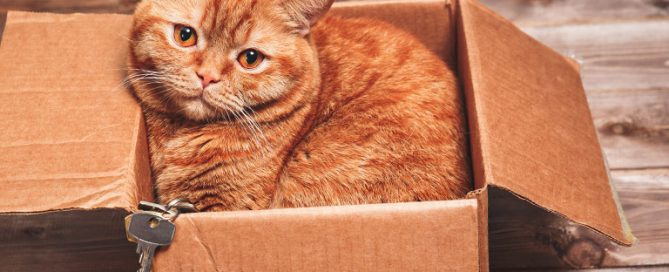 Cat in box with house keys.